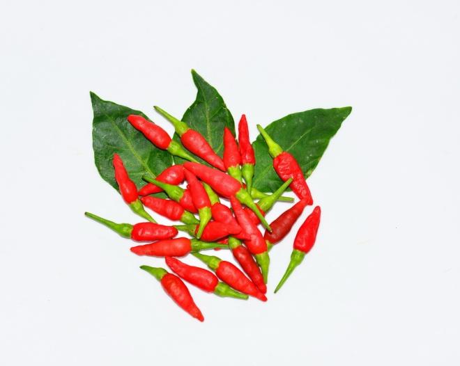 Thai spices - Bird's Eye Chili